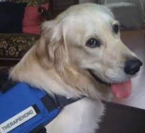 Therapiehond-1