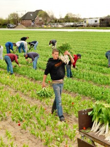 DEF Marjan Leijen - Werkloze Jongeren